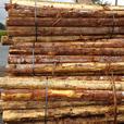 Roound Cedar Fence Posts.