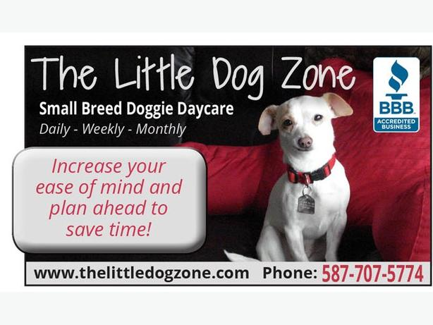The Little Dog Zone