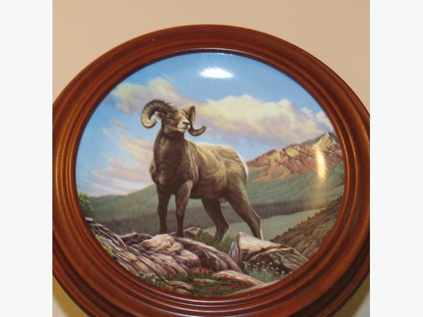 Bighorn Sheep Plate
