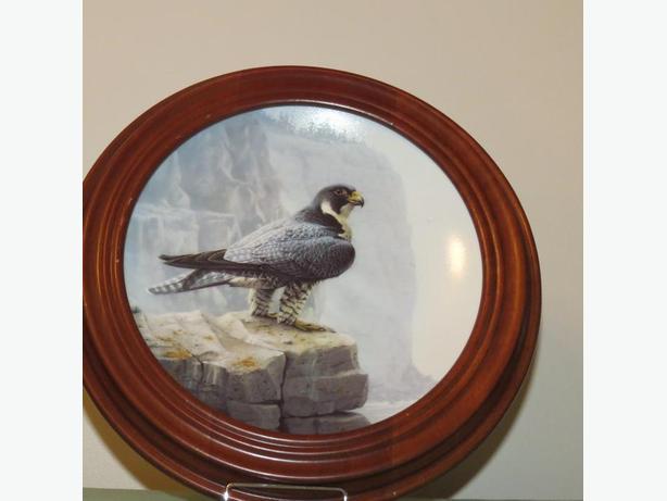 Peregrine Falcon Plate