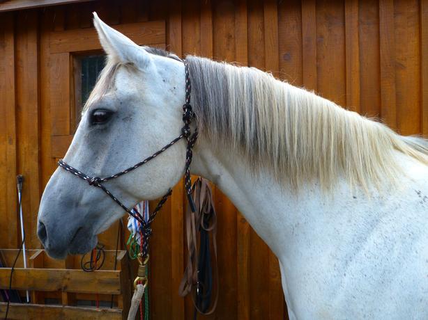 "Large Pony Mare ""Poppy"""