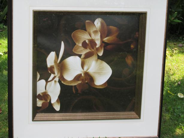 PHALAENOPSIS ORCHID FLOWERS 36 x 36 SHADOW BOX , IN GLASS