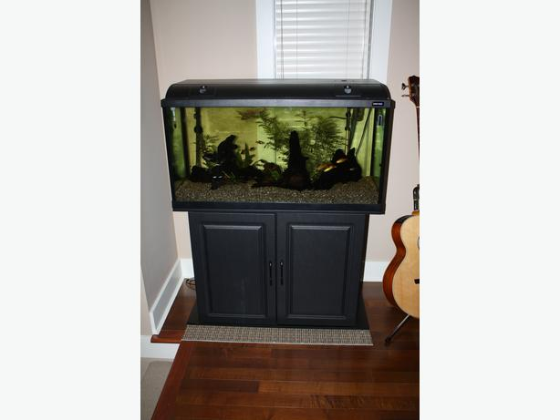 50 gallon full set up fish tank aquarium saanich victoria for 50 gallon fish tank