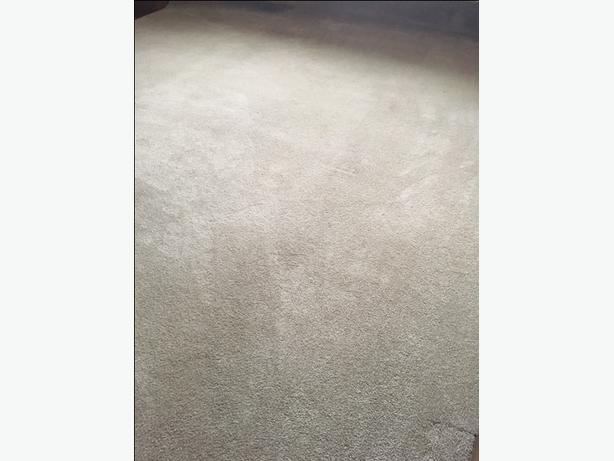 Large Trimmed Neutral Carpet