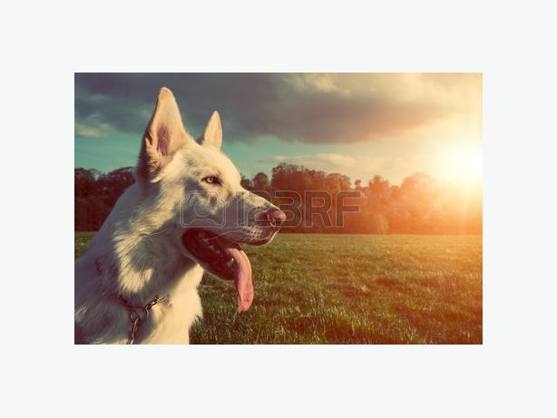 Zoopertrooper Dog Walking
