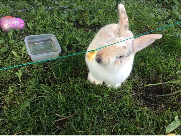 Soo's Rabbit Rescue