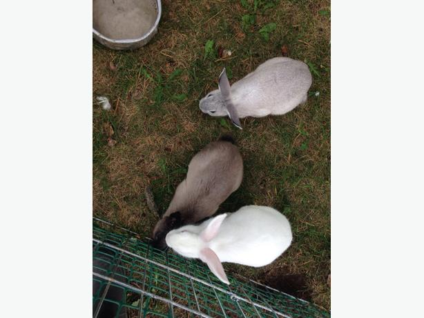 baby bunnies in need of new homes