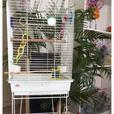 Large Bird Cage, Stand & Accessories