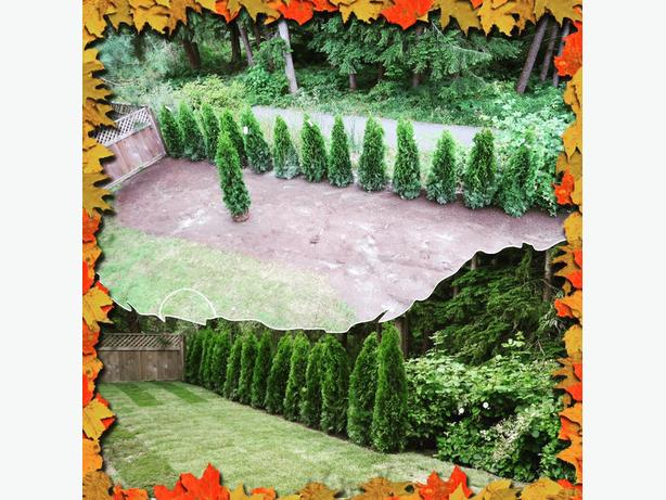Fall Preparation / Hedge Trimming SwanLawns Contracting