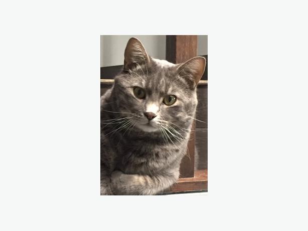 "LOST FAMILY CAT NAMED ""LEO"""