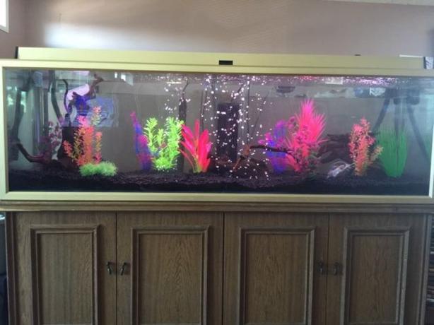 100 gal fishtank