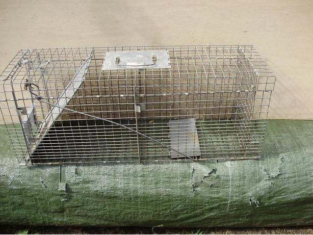 Pest control & live trap
