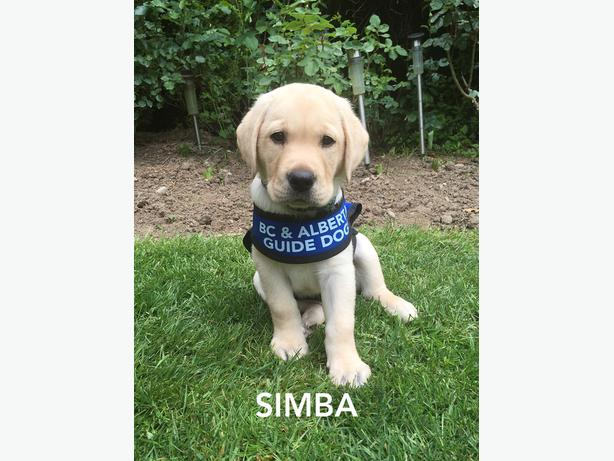 Seeking Guide Dogs for the Blind training location