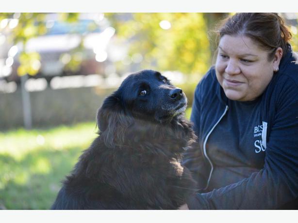 Bella - Border Collie Dog