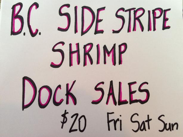 BC SIDE STRIPE SHRIMP DOCK SALES