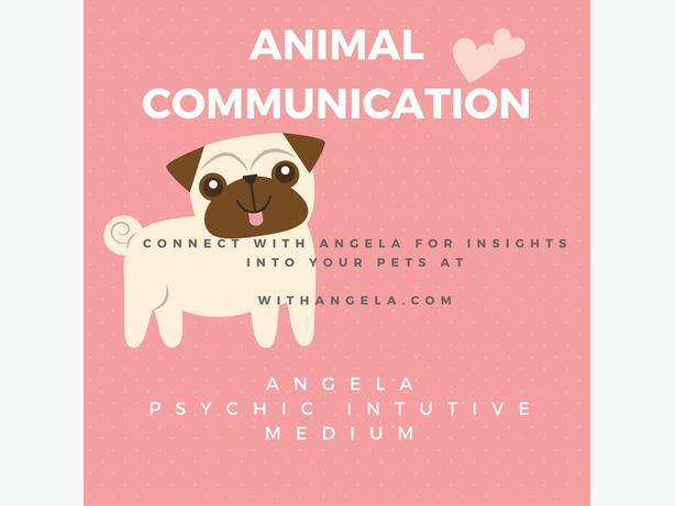 Animal Reading with Angela- Psychic Intuitive Medium