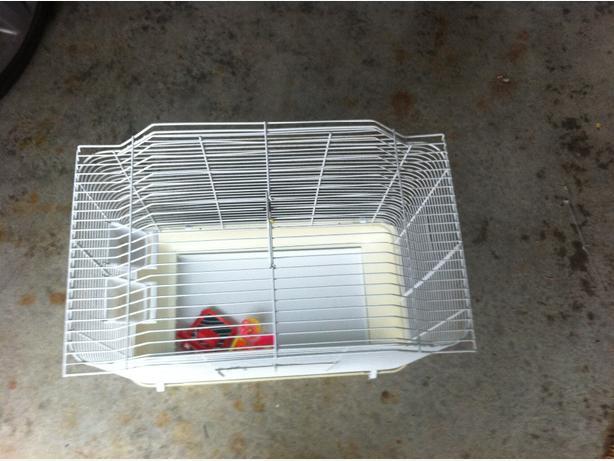 budgie/ parrotlet / lovebird