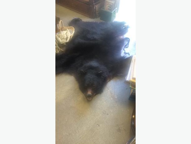 old black bear rug