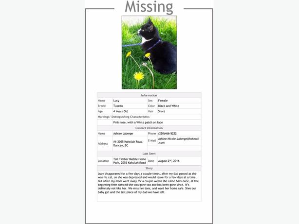Lost Cat Please Help Find