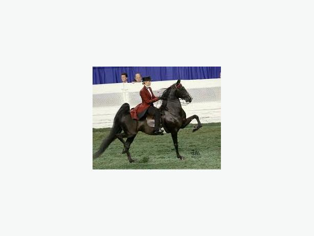 SADDLE SEAT SHOW RIDERS