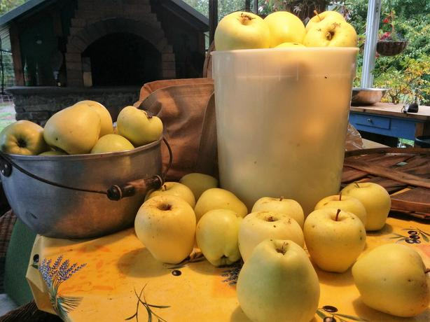 Golden Delicious Apples for Sale