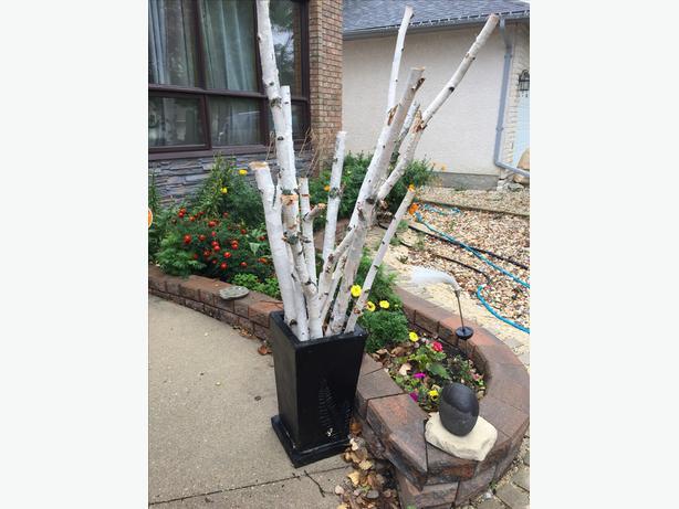 Decorative White Birch Branches