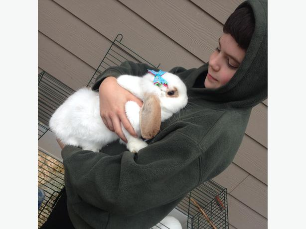 Female Mini Lop