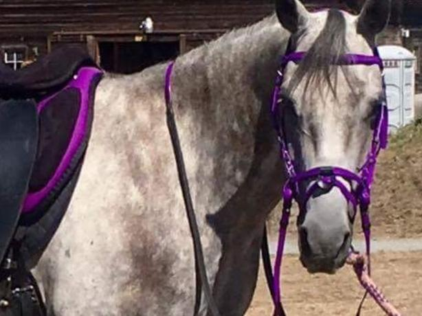 "New biothane bit or bitless bridles, 15"" and 16"" browband"