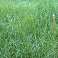 Brand New Bluestem Nursery Enviro Turf Grass Seed - $60 for all