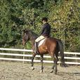 Winter Horse and rider Training