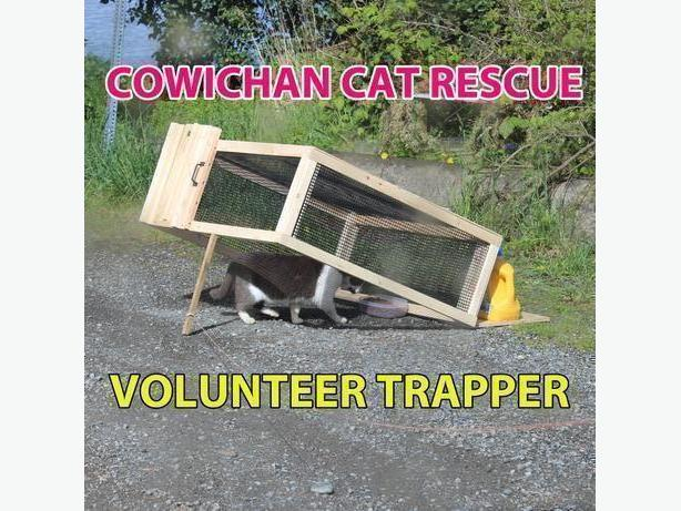 Trapper for Cowichan Cat Rescue's trap-neuter-return program