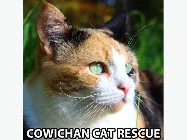 Volunteer roles at Cowichan Cat Rescue