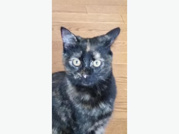 1 year old female turtleshell orleans ottawa for Having an indoor cat
