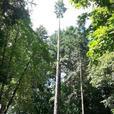 Tree work!