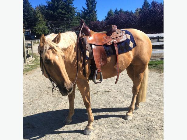10yr old AQHA registered mare for sale