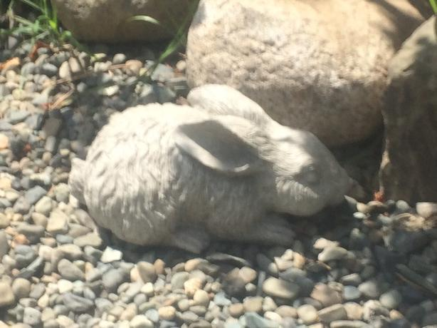 locally made cement rabbits