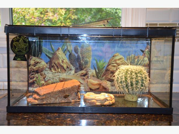 10 gallon lizard terrarium with accessories Saanich, Victoria 10 Gallon Vivarium