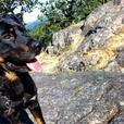 Looking for an excellent and loving home for Timber!