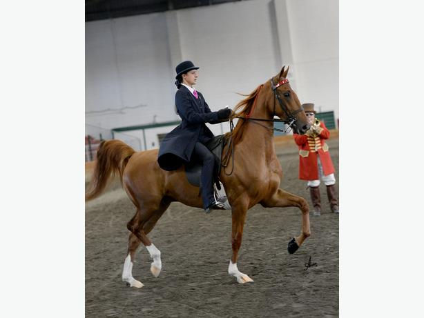 ENGLISH SADDLE SEAT RIDING LESSONS