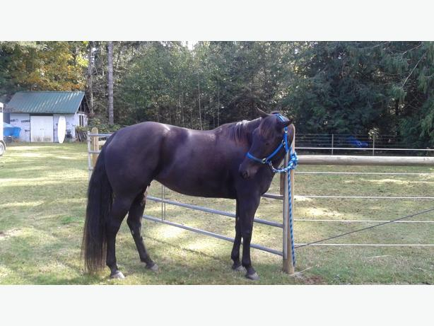 Lovely 5 year old mare