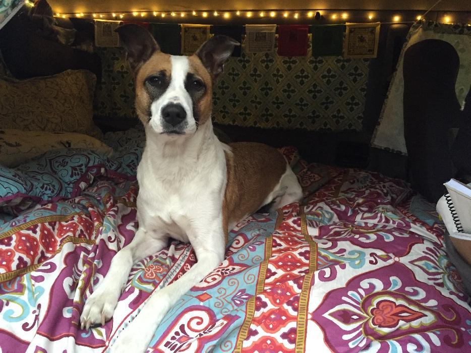 Dog Adoption Markham