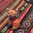 Various Beanie Baby toys (Kaleidoscope, Silver, Early, India)