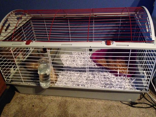 extremely playful and friendly ferret for sale, includes cage and all excesories