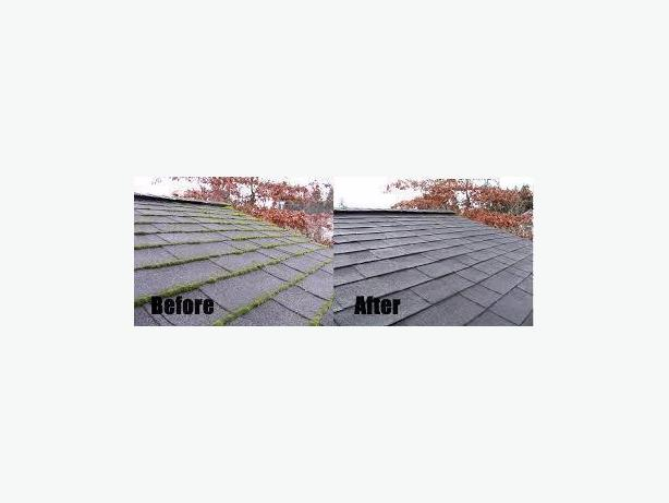 Most affordable gutter cleaning and moss removal in town $50+