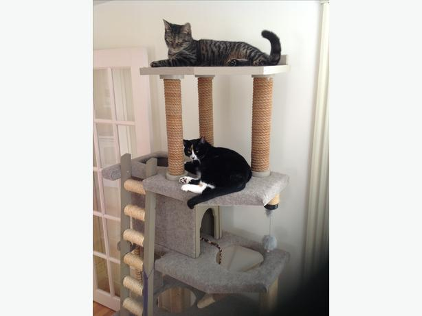 Large cat tower
