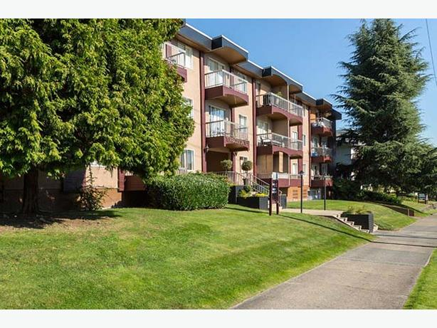 Avail. Jan    1 bedroom New Westminster The Terraces on Tenth