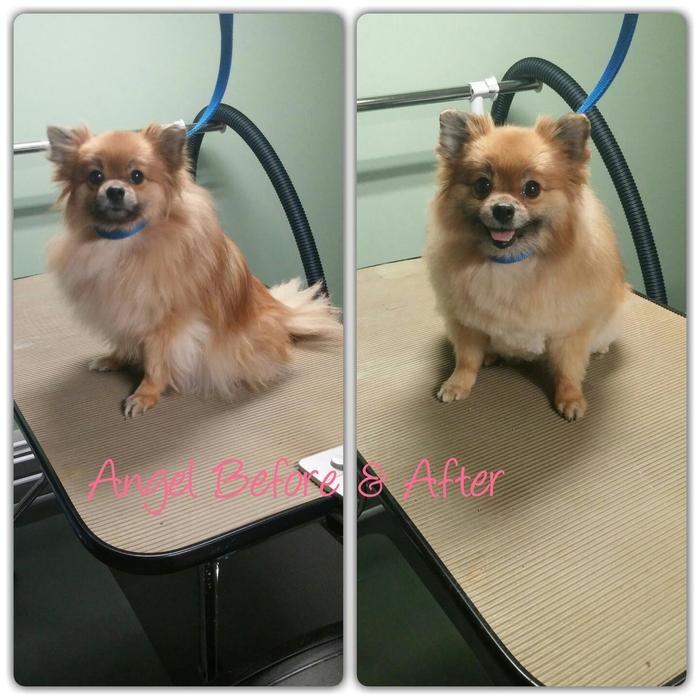 Dog Grooming Edmonton North