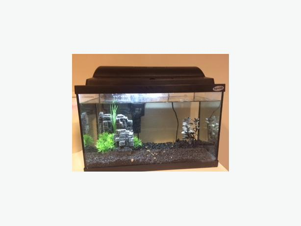 Hagen Fish Tank and Accessories