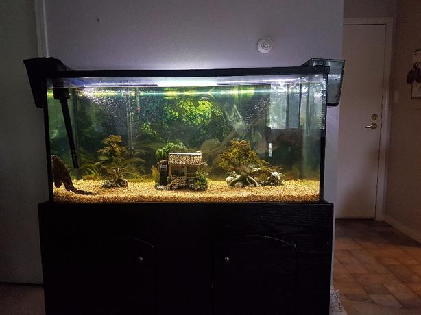 90 gallon fish tank victoria city victoria for 90 gallon fish tank stand
