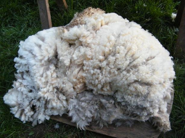 Unwashed Fleeces